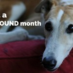 April is Adopt a Greyhound Month