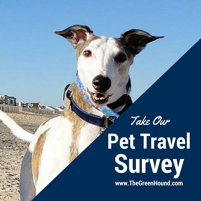 How do you travel with your pet?